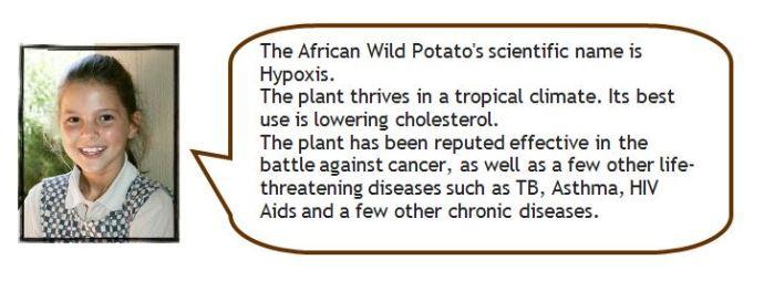 lynn-plants